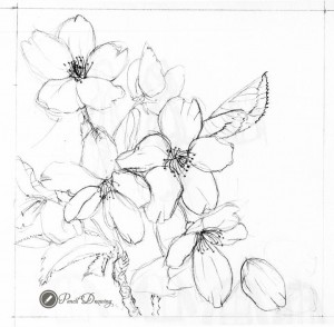 300x294 Cherry Blossom Pencil, View More In Here Httppencildrawing