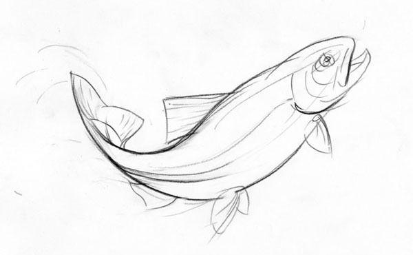 Salmon Drawing Image
