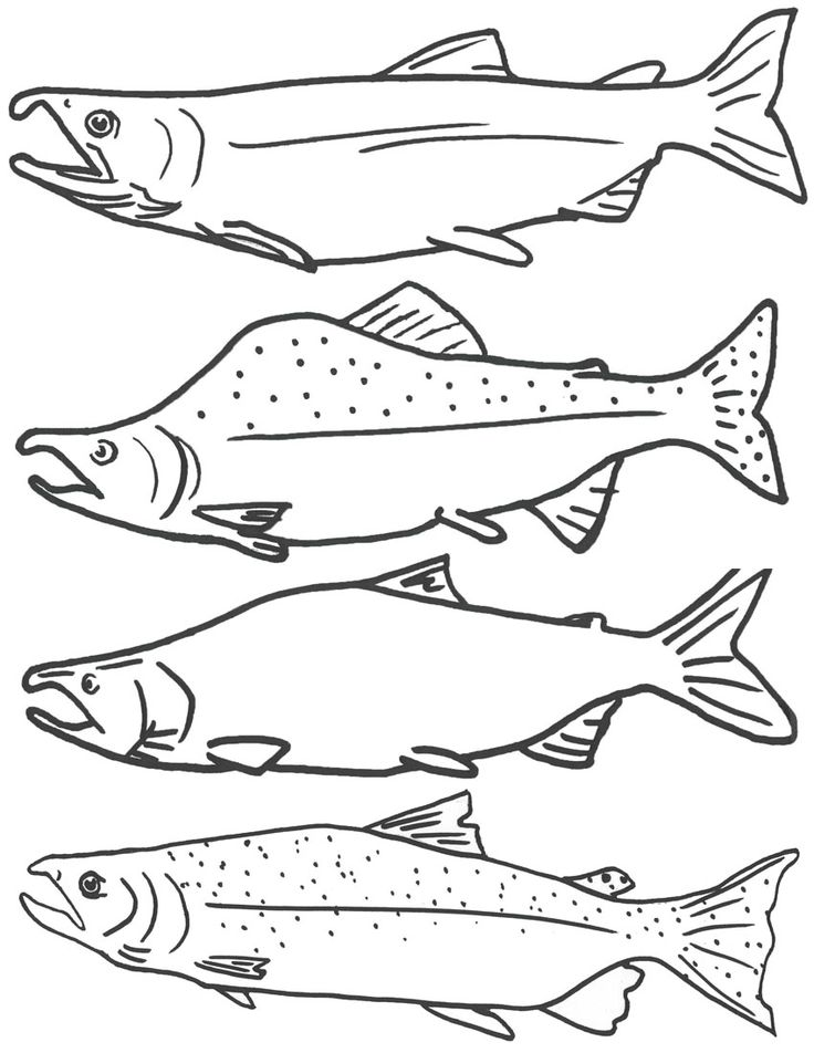 Salmon Drawing Image at GetDrawings.com | Free for personal use ...