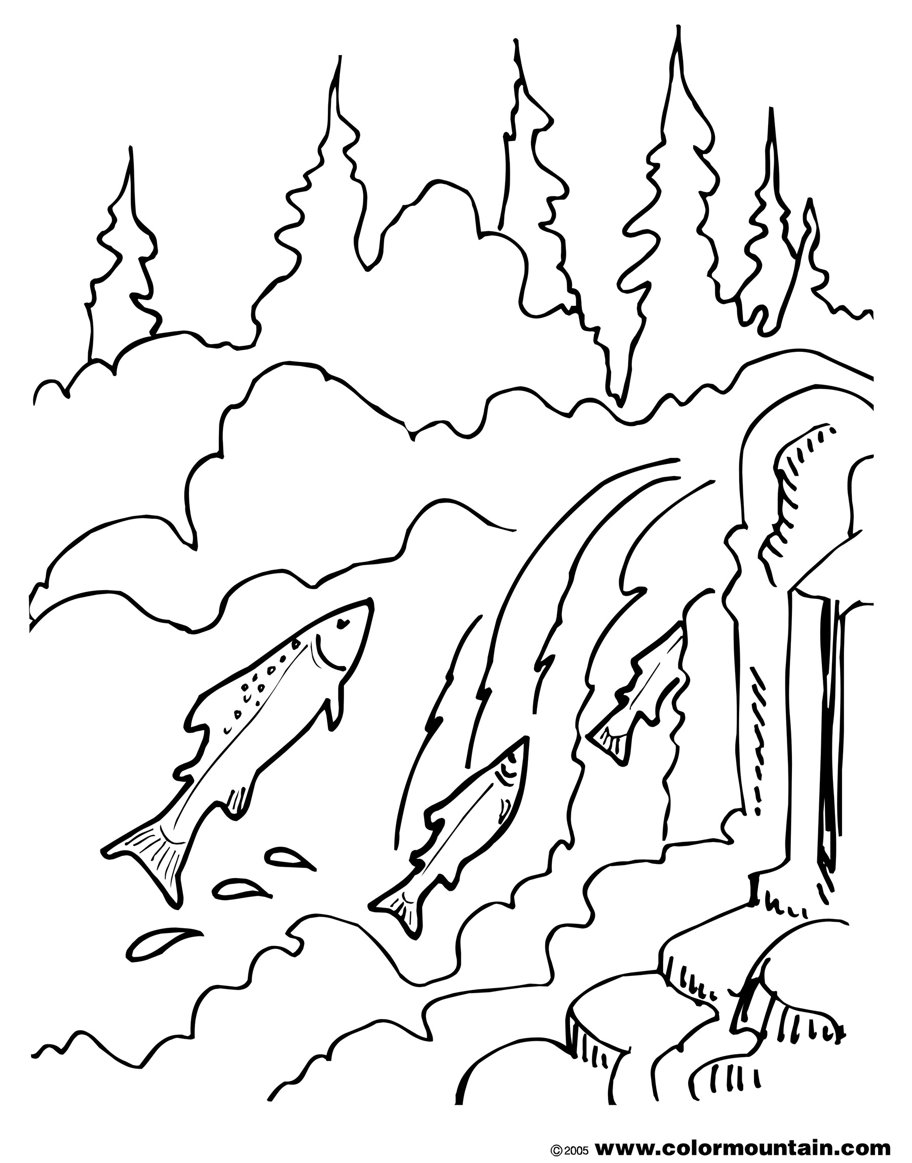 1800x2294 Salmon Coloring Pages
