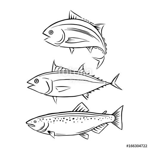500x500 Drawing Tuna And Salmon Fish, Vector Stock Image And Royalty Free