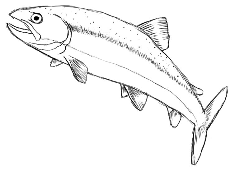 800x563 How To Draw A Fish
