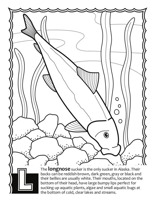 638x826 Alaska Fish Abc's Coloring Book