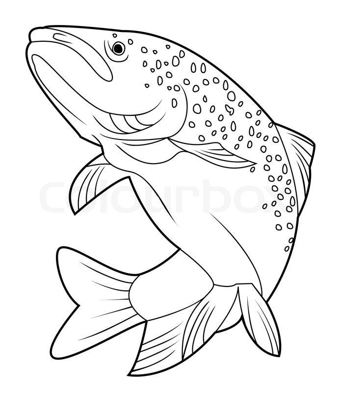 687x800 Salmon Fish Stock Vector Colourbox