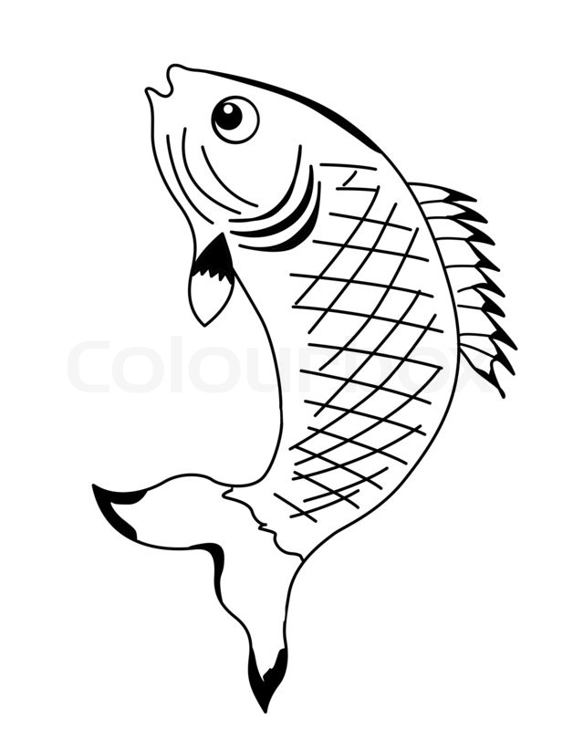 628x800 Silhouette Fish On White Background Stock Photo Colourbox