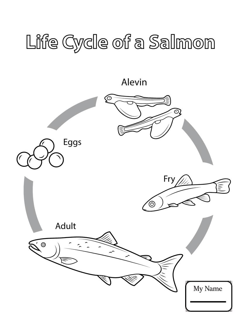 809x1084 Salmon