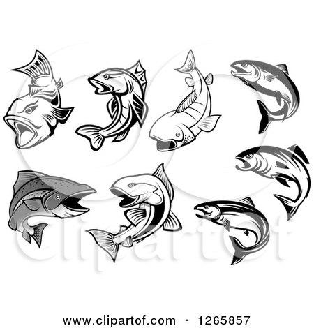450x470 Clipart Of Salmon Fish