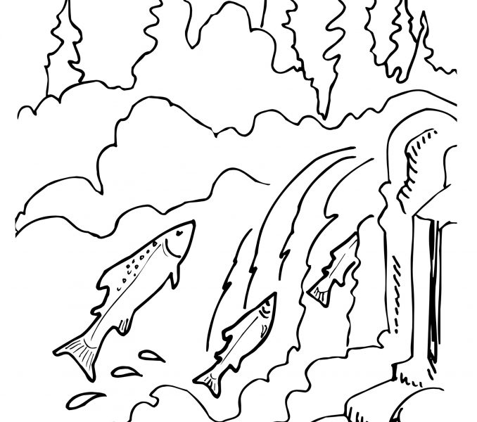 678x600 Salmon Coloring Pages Kids Coloring
