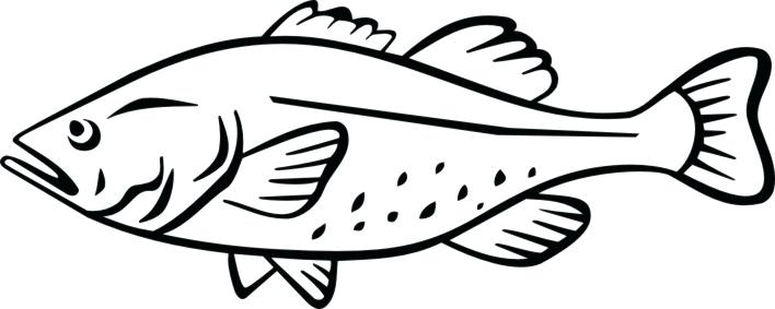 708x283 Idea Saltwater Fish Coloring Pages Or Display Fish Coloring Pages