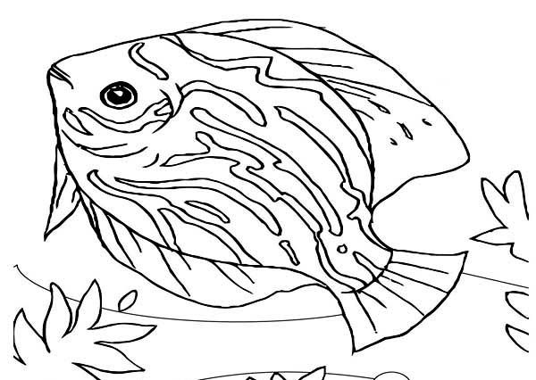 600x426 beautiful saltwater fish sea animals coloring page