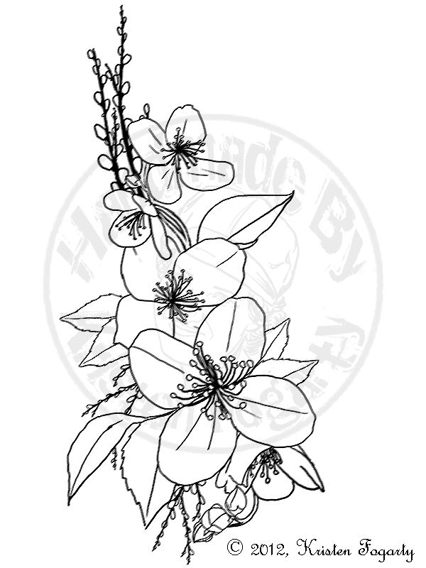 600x800 Jasmine Flower Drawings Related Keywords Amp Suggestions