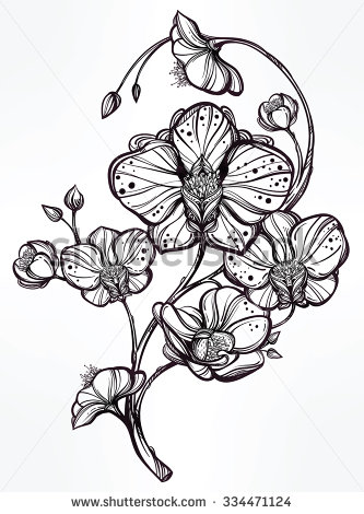 333x470 Vintage Floral Highly Detailed Hand Drawn Orchid Flower Stem