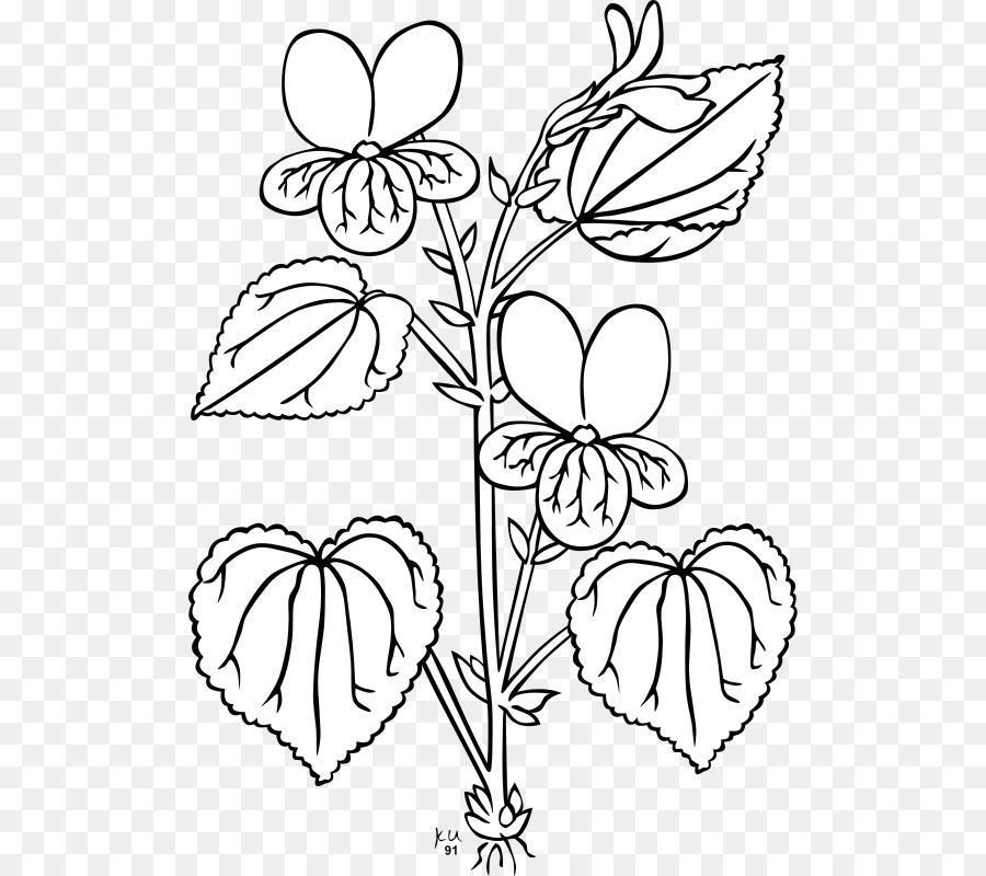 900x800 Viola Glabella Plant Clip Art