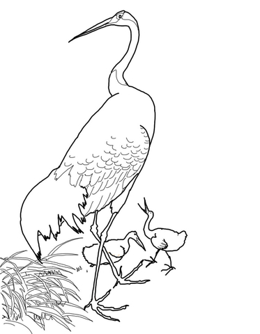 373x480 Japanese Red Crowned Crane By Ohara Koson Coloring Page Free