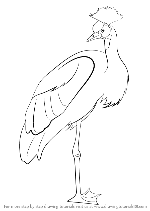 598x844 Learn How To Draw A Crowned Crane (Birds) Step By Step Drawing