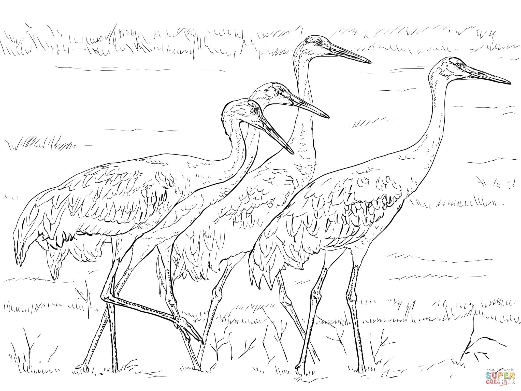2048x1536 Sandhill Crane Coloring Pages Colouring In Sweet Page Four Cranes