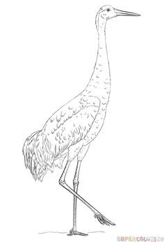 236x347 Sandhill Crane Art Print