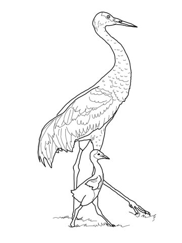 360x480 Sandhill Crane With Baby Coloring Page From Cranes Category