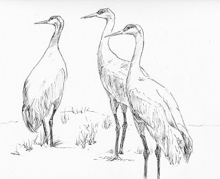 320x261 Watercolor Studio With Joan Wolbier Three Sandhill Cranes