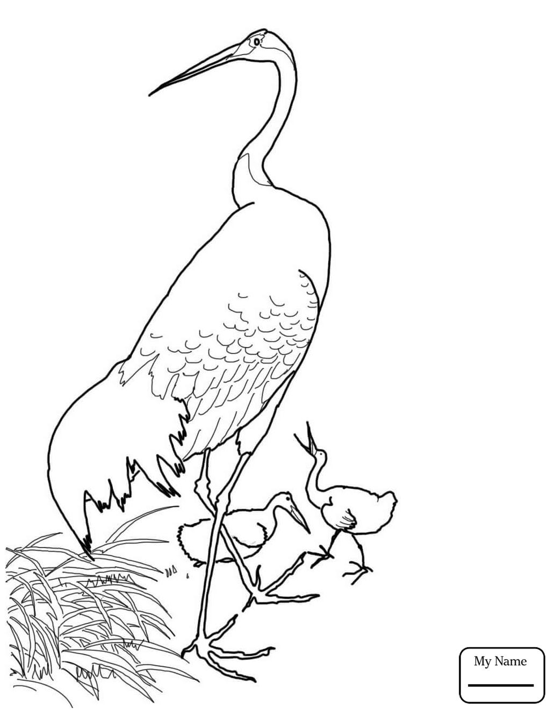 1033x1330 Coloring Pages Crane Cranes Birds