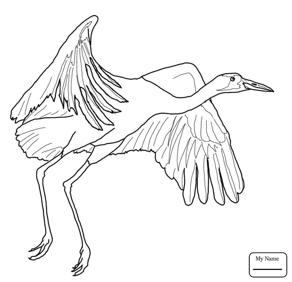 1224x1183 Coloring Pages For Kids Sandhill Crane With Cute Chick Birds