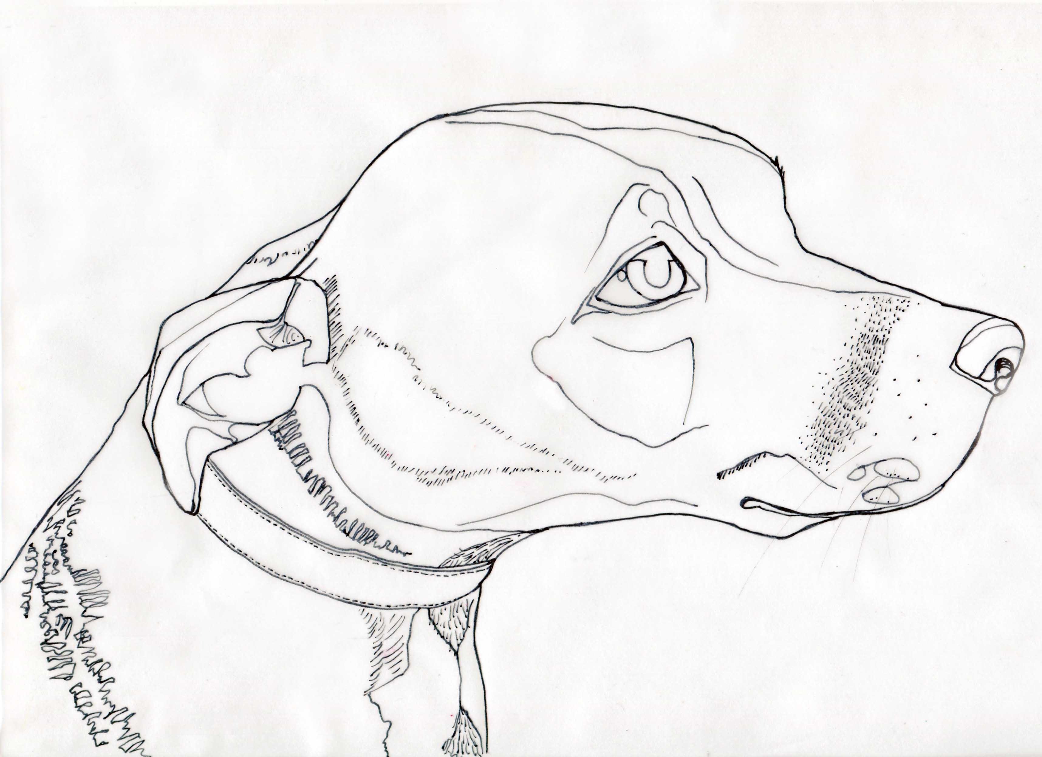 3431x2493 Line Drawing Sarah Kirk Illustration