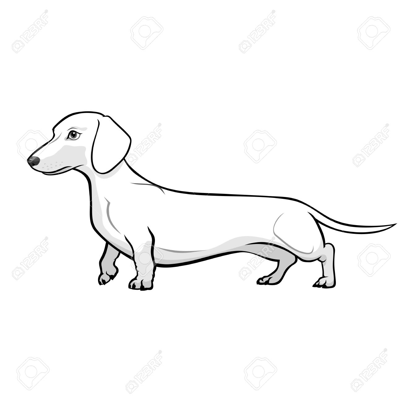 1300x1300 Dachshund Dog Black Amp White Vector Illustration Royalty Free