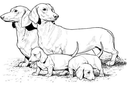 440x300 Dachshund Puppy Coloring Pages 50 Free Puppy Dog Coloring Pages