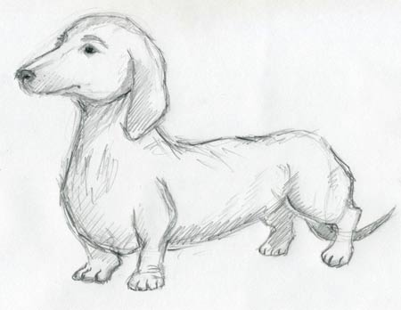 450x348 Image Result For Dachshund Drawing Study Sketches