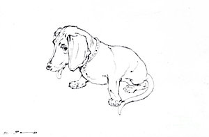 300x197 Sausage Dog Drawings Fine Art America