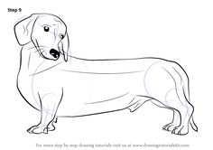 236x166 Wiener Dog With Color Pencils [Time Lapse] Drawing Tutorials