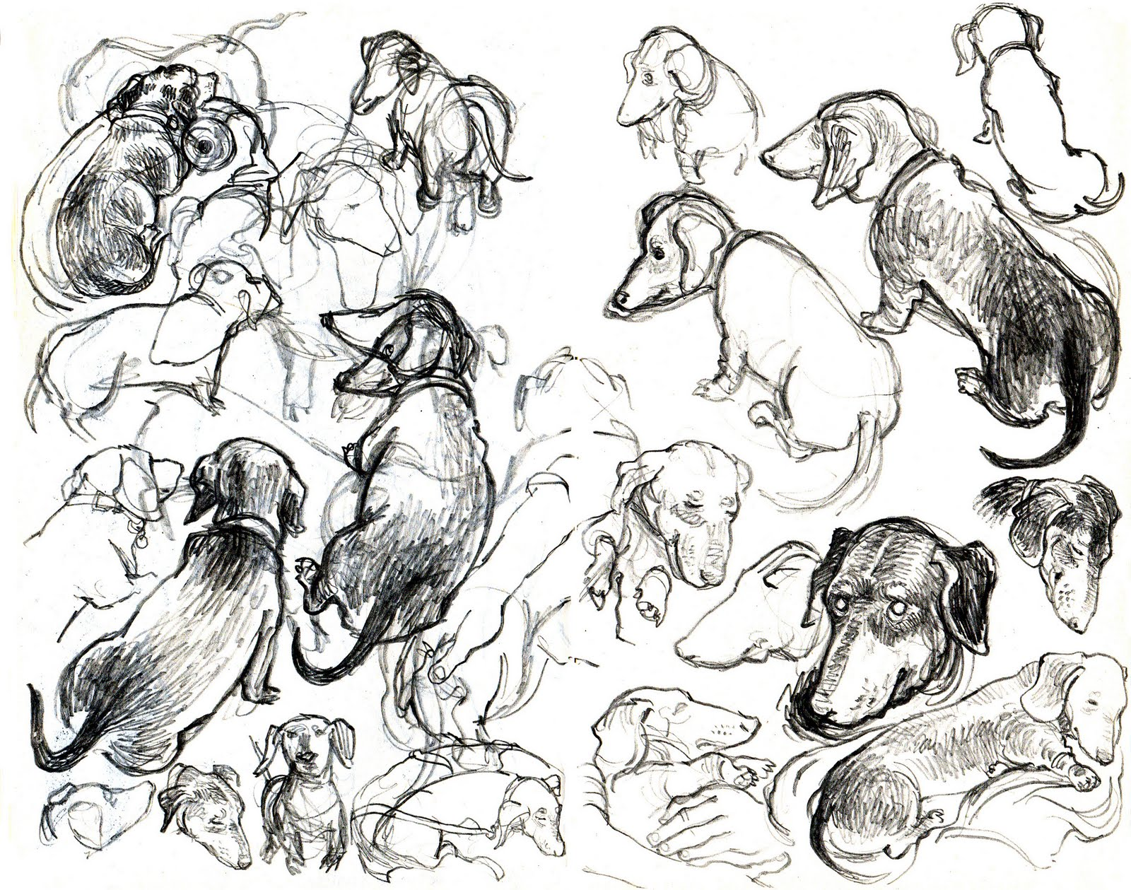 1600x1259 Sausage Dog Archives