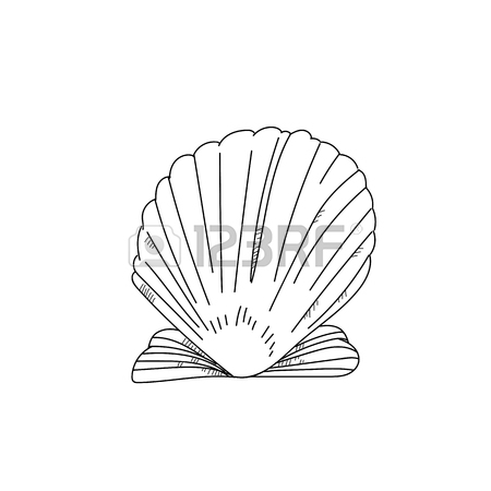 450x450 Hand Drawn Scallop Shell Sketch On White Background Stock Photo