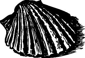 300x205 Scallop Shell Clip Art