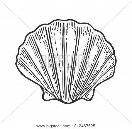 450x441 Scallop Shell Images, Illustrations, Vectors