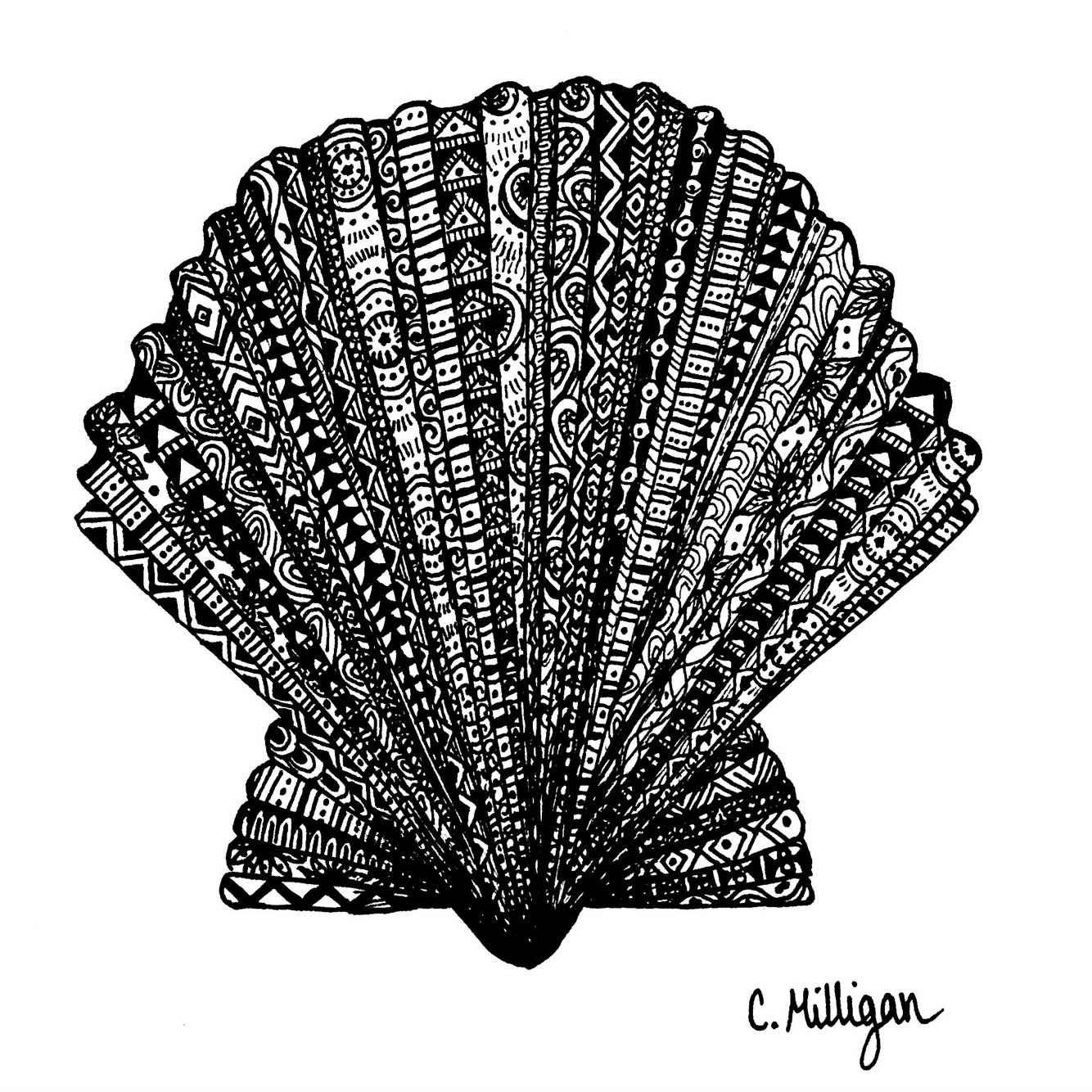 1334x1334 Scallop Shell Zentangle Drawing By Sea Milligan Designs Seashell