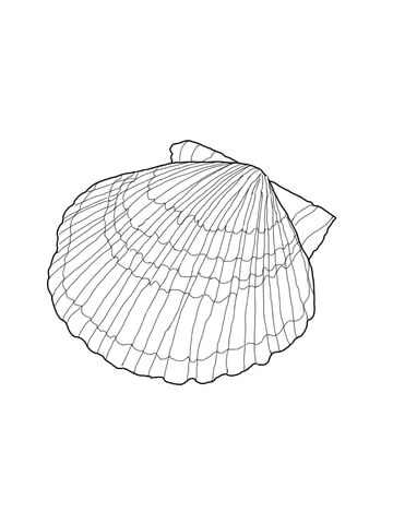 360x480 Scallop Shell Coloring Page Free Printable Coloring Pages