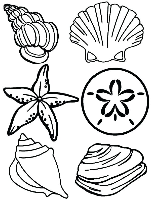 600x800 Seashell Pictures To Color Scallop Sea Shell Sketch Style Vector