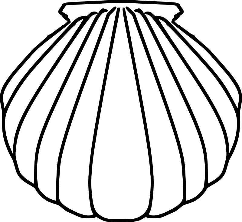 Scallop Drawing At Getdrawings Free For Personal Use Scallop