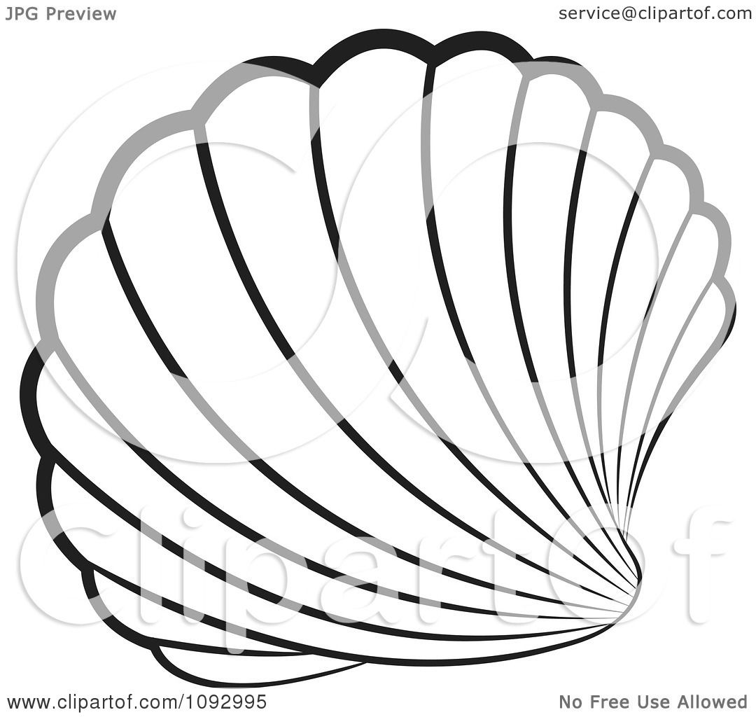 1080x1024 Clipart Black And White Scallop Sea Shell
