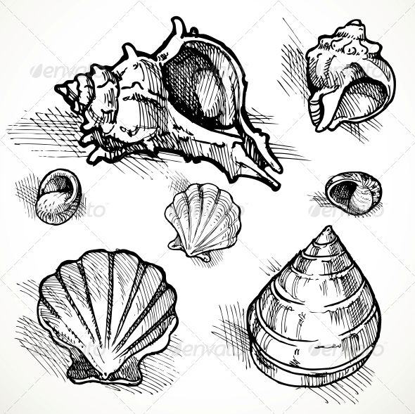 590x589 Drawn Shell Beach
