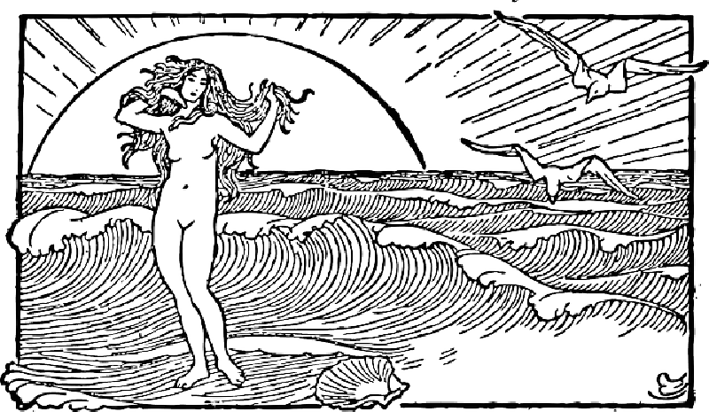 800x465 Outline, Woman, Sun, Half, Stand, Venus, Scallop, Shell