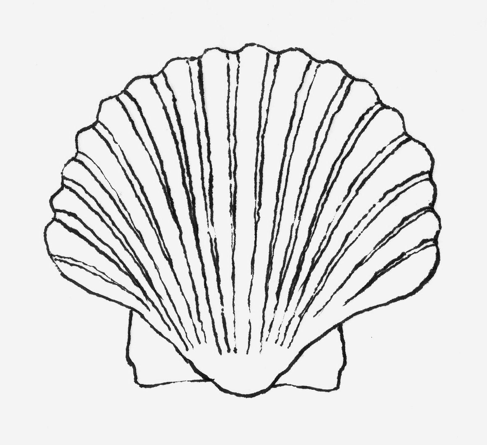 1575x1437 Printable Shell Line Drawing
