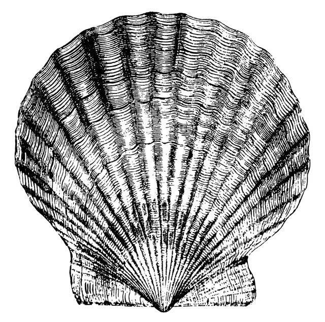 640x634 Scallop Coastal Crafts Clip Art, Stenciling And Craft