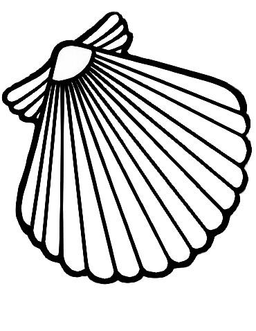 370x478 Scallop Shell