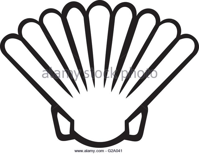 640x498 Scallop Underwater Stock Vector Images