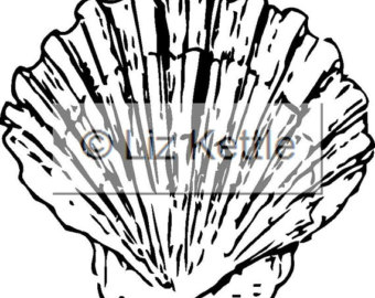 340x270 Scallop Shell Design Etsy