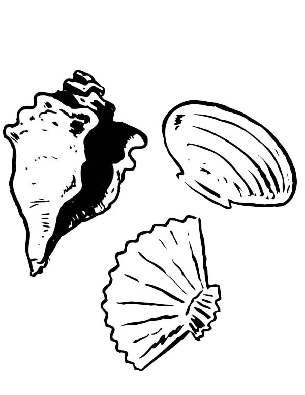 600x776 A Conch Clam Scallop Seashell Coloring Page A Conch Clam
