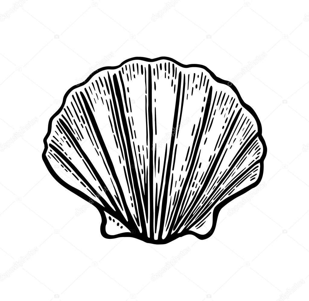 1024x998 Sea Shell Scallop. Black Engraving Vintage Illustration. Isolated