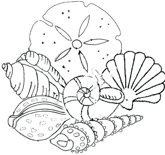 550x519 Seashell Pictures To Color Scallop Sea Shell Sketch Style Vector